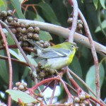 When Harold Reeve moved to Modesto in 1983, one of the first things he decided to do was keep a list of all the bird species he saw in Stanislaus […]