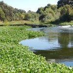 It's perfectly understandable that anyone taking a stand in favor of increased river flows in the northern San Joaquin Valley is likely to be compared to an assailant of motherhood, […]