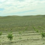 New Orchard, Eastern Stanislaus County