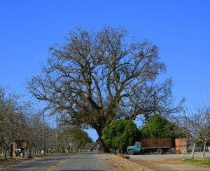 """""""The Tree"""" in Wood Colony"""