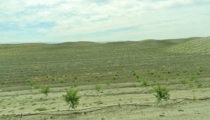 New Orchard Stanislaus County Foothills