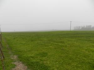 Fallowed Ground Near Oakdale