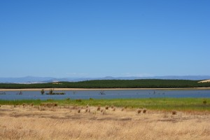 Modesto Reservoir Summer 2014