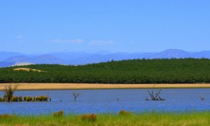 Orchard at Modesto Reservoir