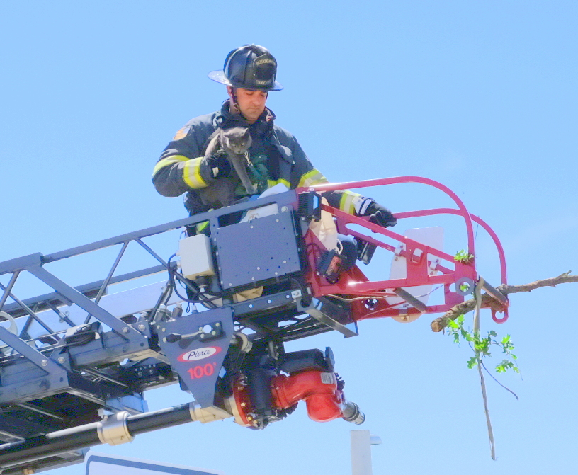 Cat rescued by firefighter at Modesto OES