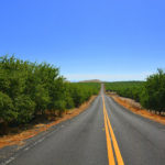 Almonds to the horizon, eastern Stanislaus County