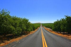Almonds to the horizon, eastern Stanislaus County